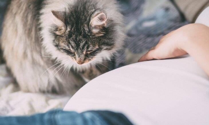Mito ou verdade: Grávidas devem evitar gatos?