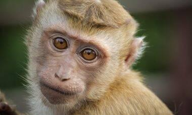 Zoológico de Bauru oferece curso de férias online para crianças e adolescentes