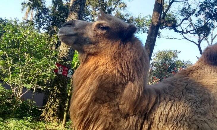 Zoo Safári